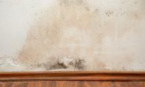 politintas - parede com mofo