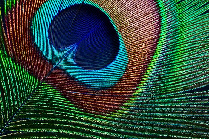 Escolha das cores: inspiração na natureza